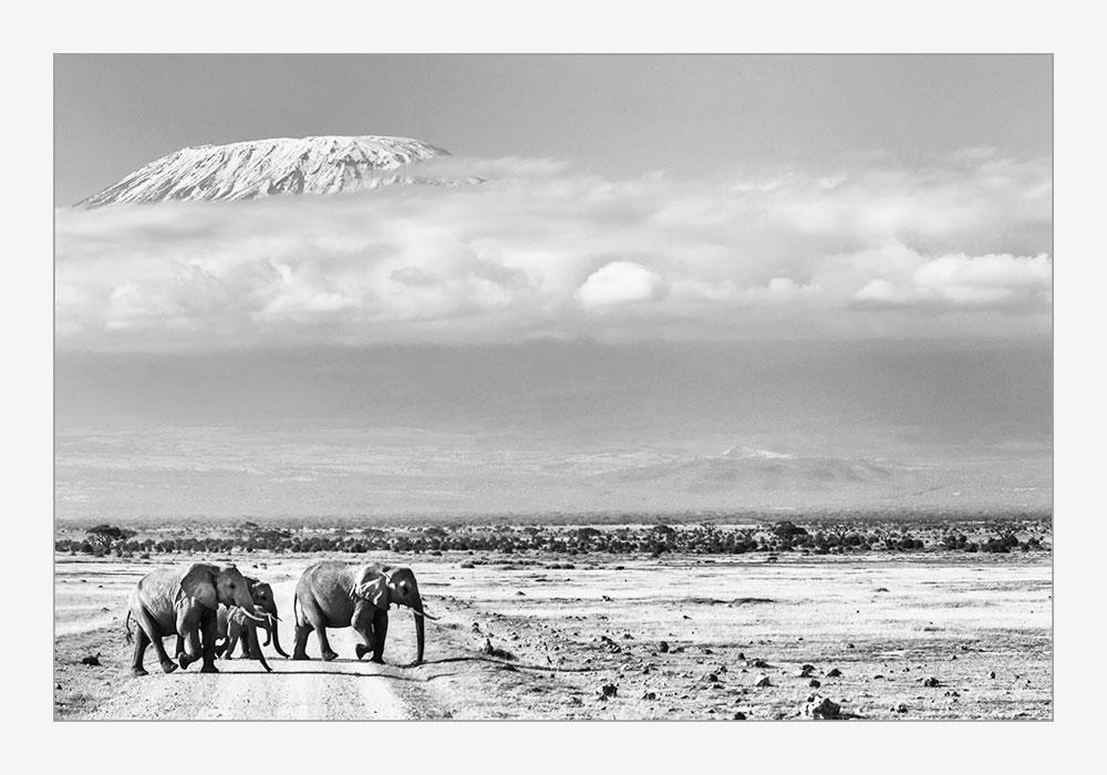 MT25 Kilimanjaro, Elefanten / elephants