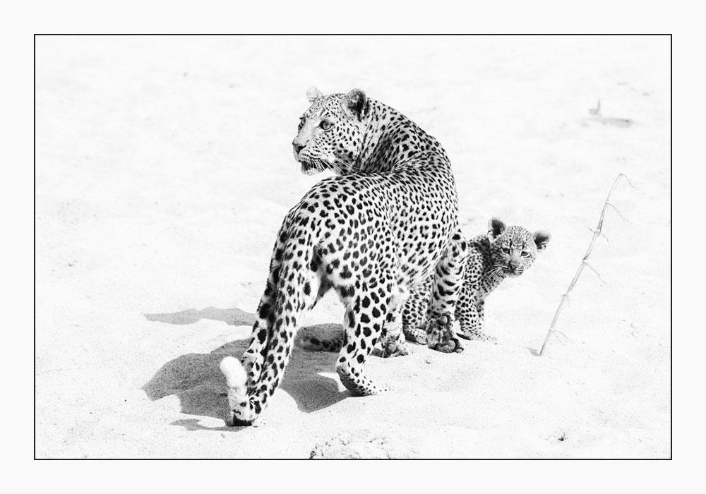 MT60 Leopard / leopard