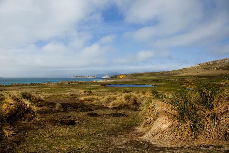 A09 Falklands, Carcass Island