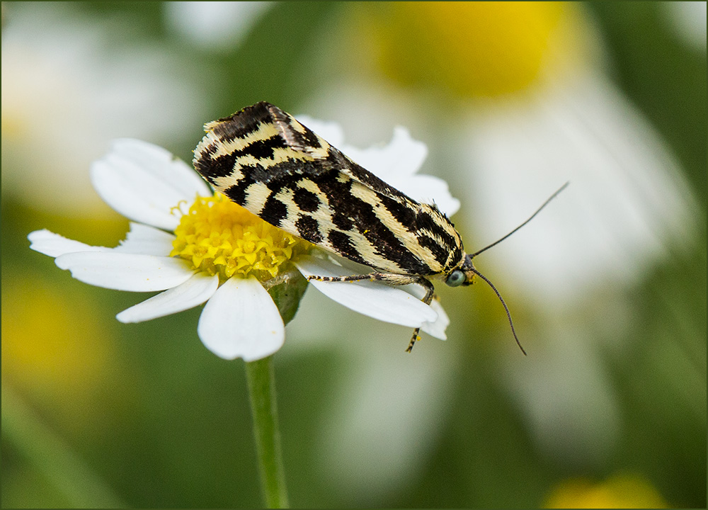 BG23 Insekt / insect