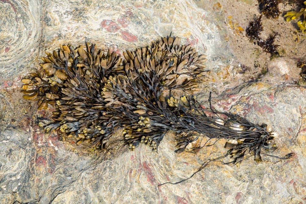 GB031 Felsenwatt / rock mudflats