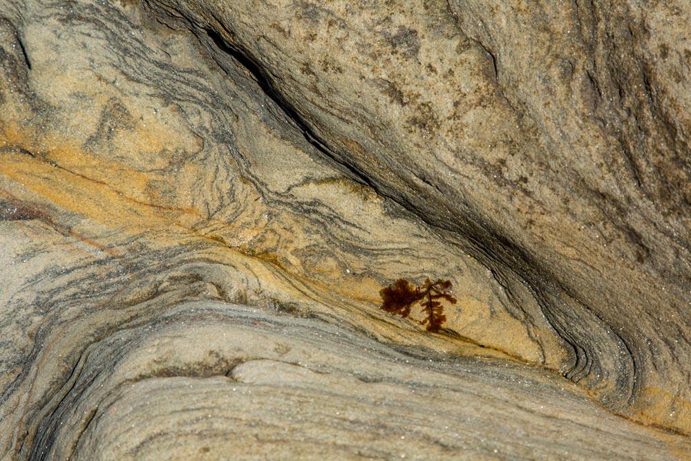 GB033 Felsenwatt / rock mudflats