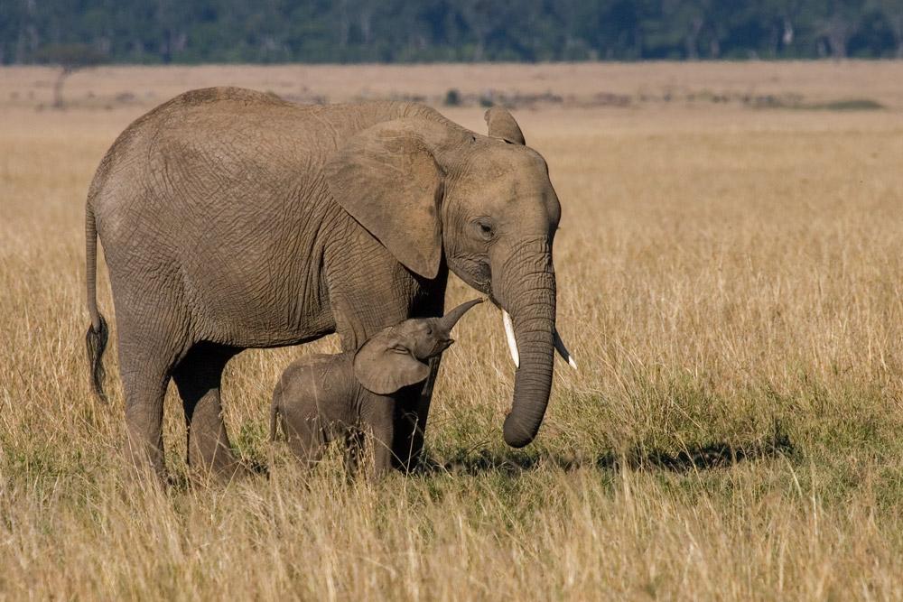 K104 Elefanten / elephants