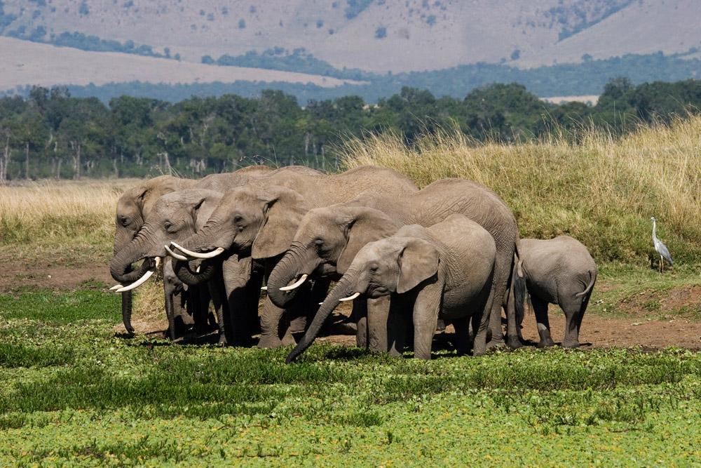 K105 Elefanten / elephants