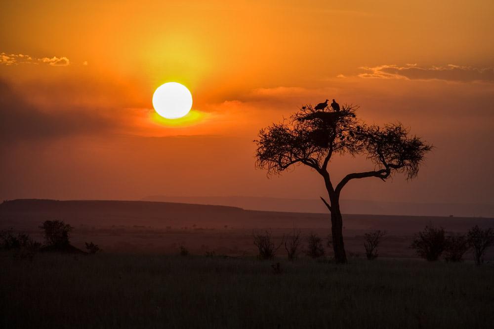 K145 Masai Mara, Sonnenaufgang / sunrise