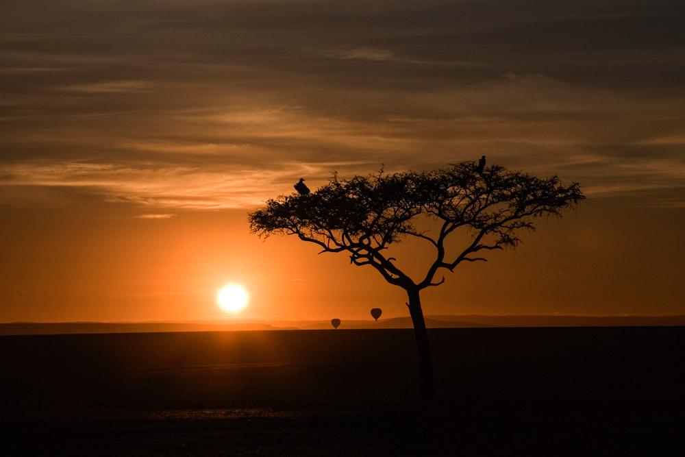 K146 Masai Mara, Sonnenaufgang / sunrise