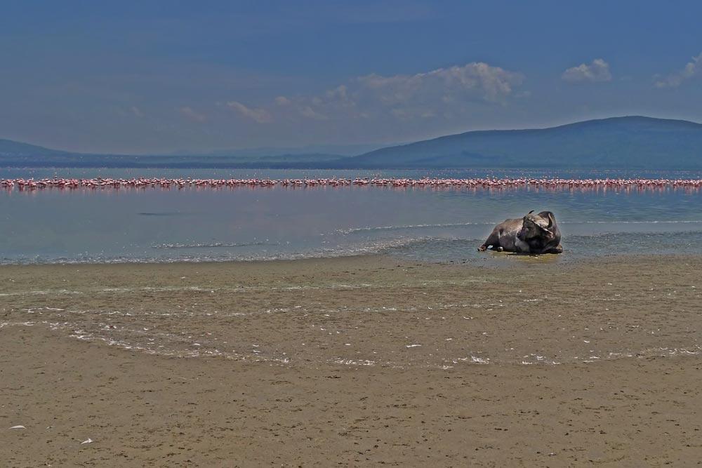 K243 Lake Nakuru