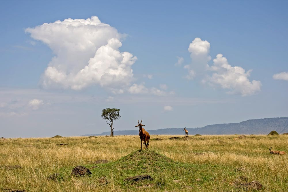 K284 Masai Mara, Topis / topis