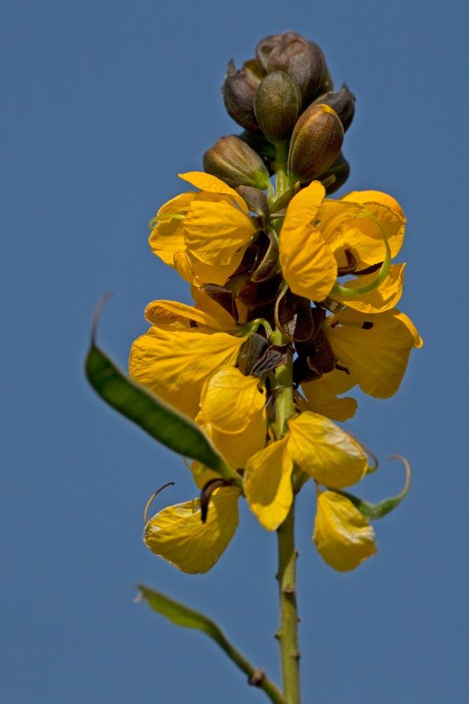 K387 Pflanze / plant