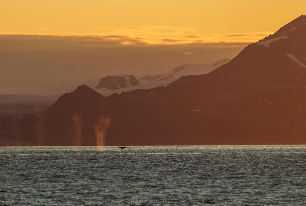 SP107 Blauwale / blue whales