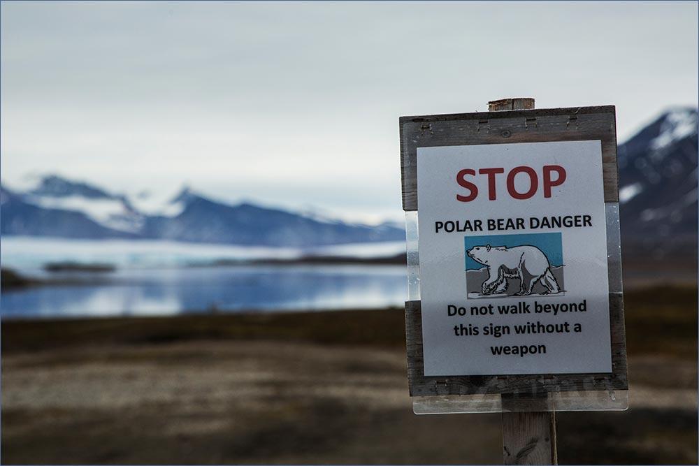 SP174 Warnung vor den Eisbären / mind the polar bears