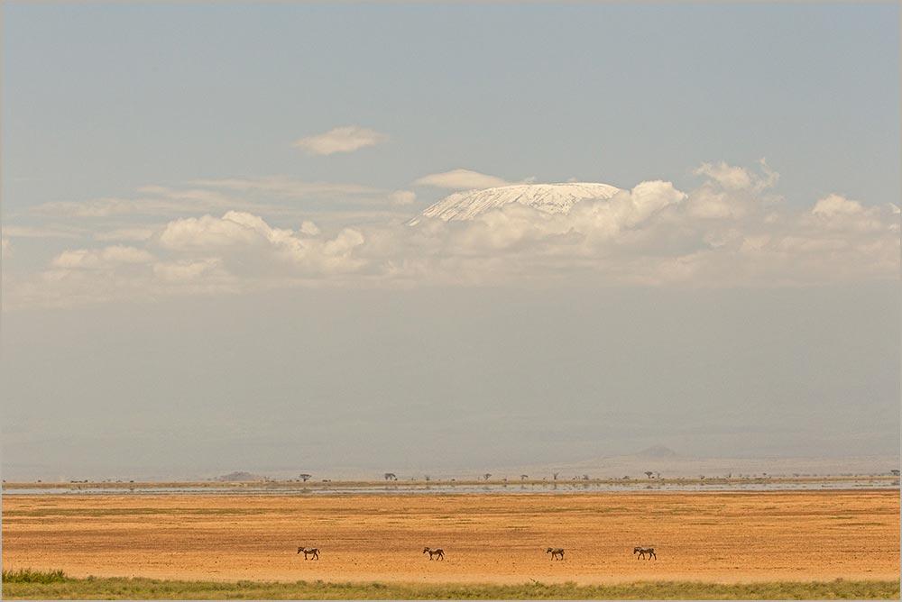 T016 Amboseli, Kilimanjaro