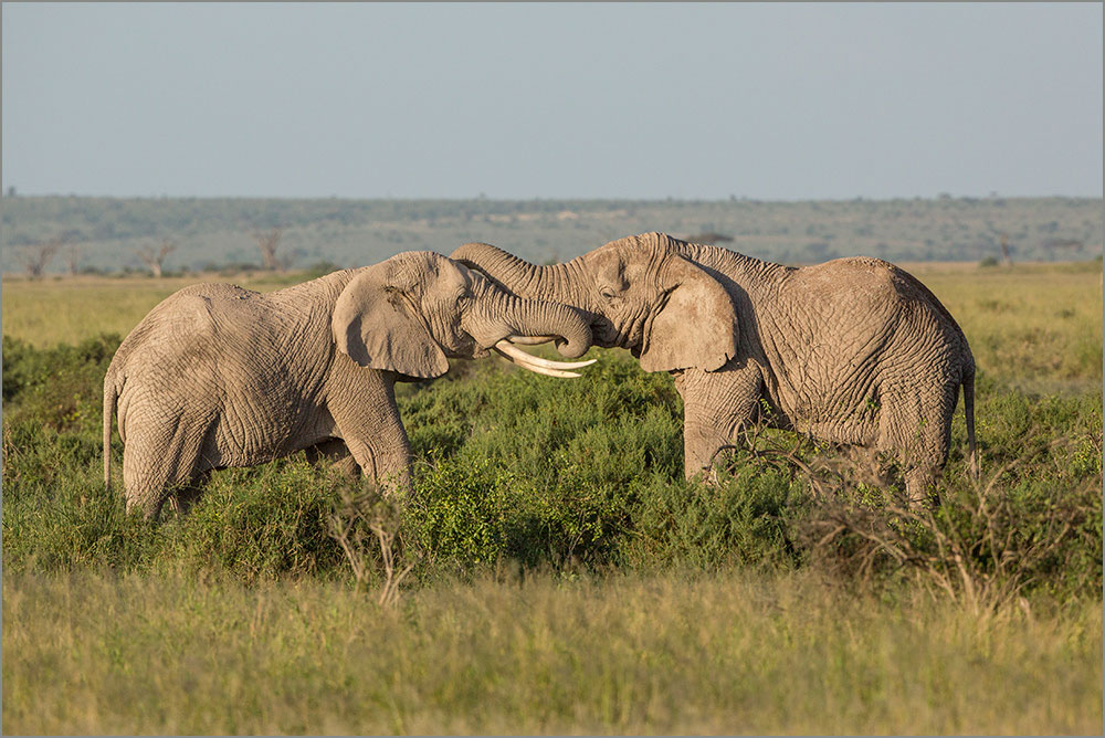 PF09 Elefanten / elephants