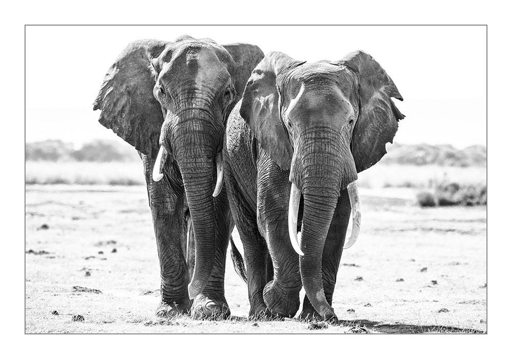 PF20 Elefanten / elephants